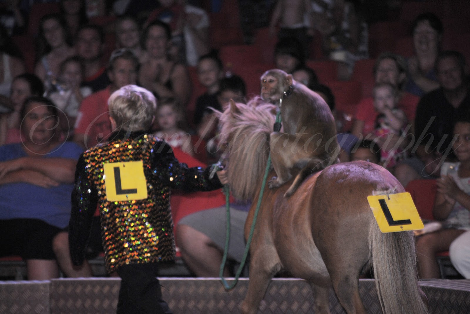Stardust Circus - SUPPORTING CIRCUSES WITH ANIMALS